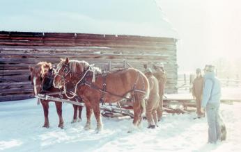 horse yoke pull teamwork